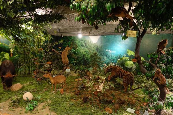 森林动物展厅